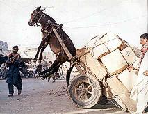 donkey and cart unbalanced due to an error of moments!