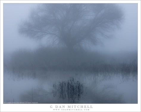 Fog, Tree, And Pond