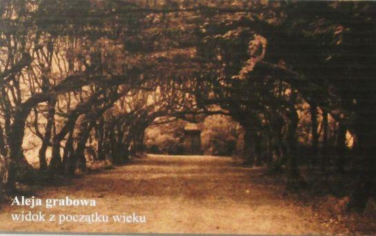 aleja grabowa, zdjęcie z opisu w parku