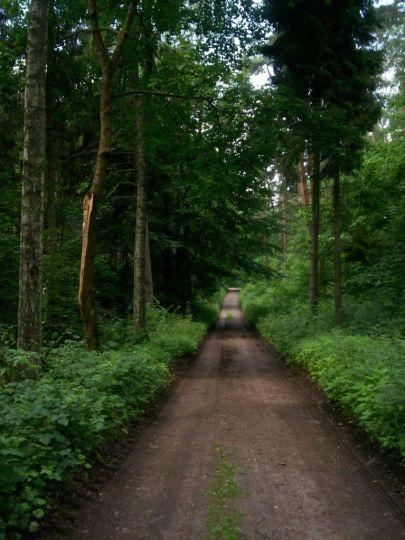 droga w Lesie Szpęgawskim; z archiwum autorki