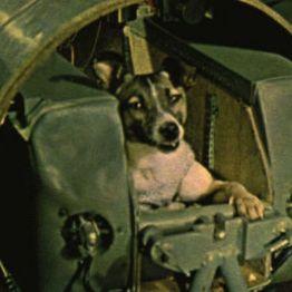 pies w sputniku