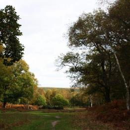 widok na las Sherwood