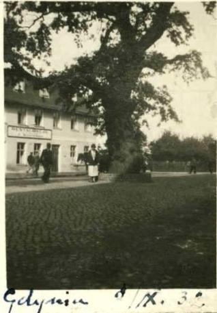 Dąb i restauracja przy Portowej, 1932 r.