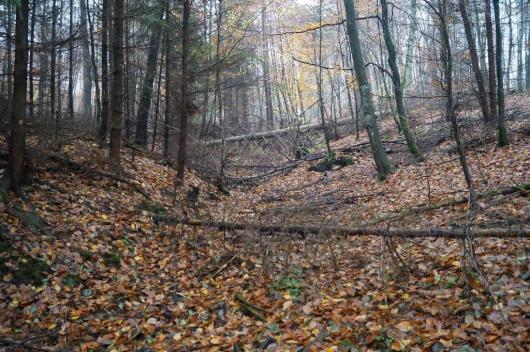 Naturalne materiały (martwe drewno), które z powodzeniem można wykorzystać przy budowie progów piętrzących z miejscowych materiałów – las w pobliżu Złotej Karczmy.