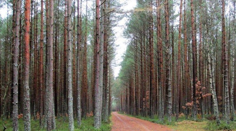 Lasy Piaśnickie