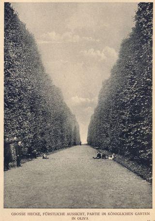 Książęcy widok - oś widokowa w Parku Oliwskim
