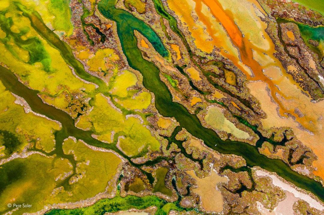 The art of algae Pere Soler winner of Natural History Museum Wildlife Photographer of the Year 2015