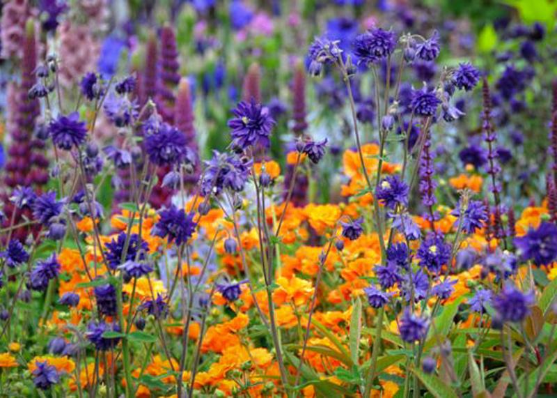 gold medal winning Healthy Cities Garden by Chris Beardshaw chelsea flower show 2015