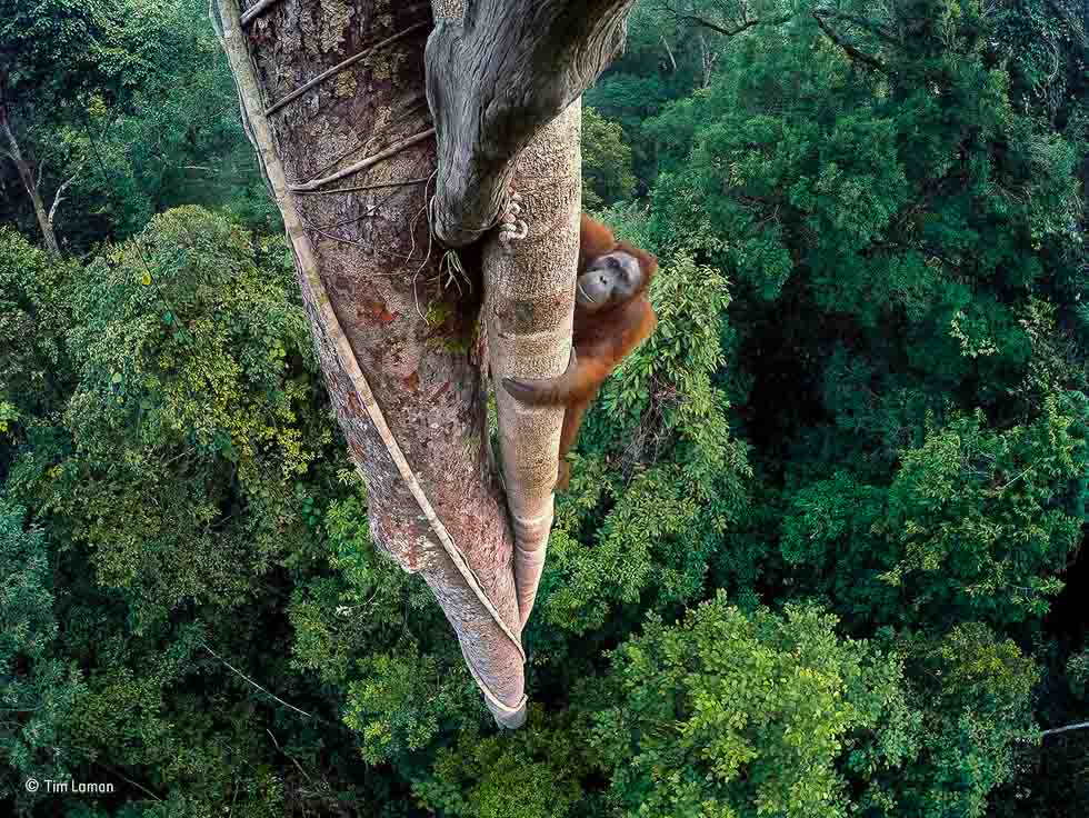 Entwined Lives Wildlife Photographer of the Year 2016