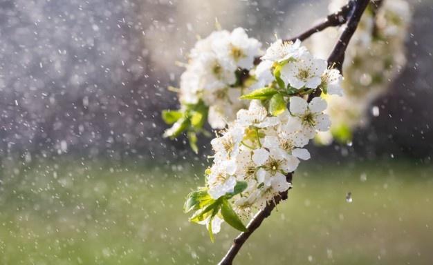 Prognoza meteo: Încă trei zile cu ploi