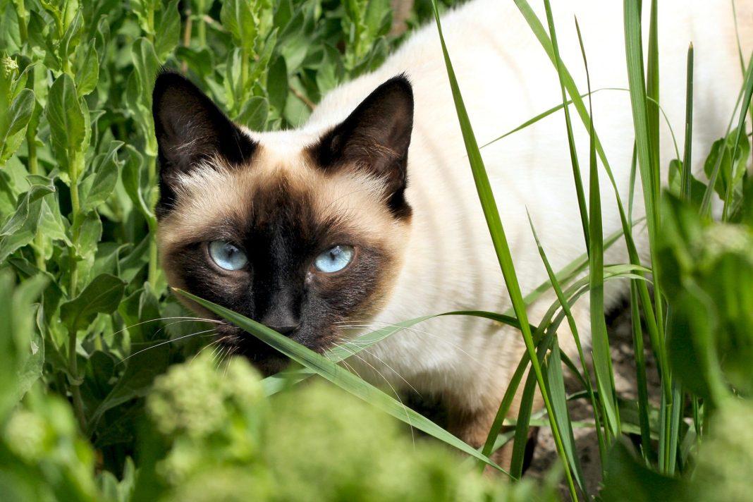 Un bărbat a fost acuzat de furt după ce a salvat o pisică