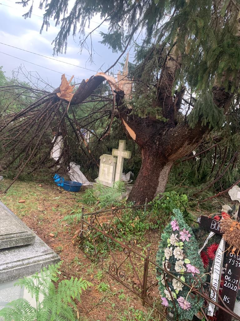 Gorj: Distrugeri produse în cimitirul din Stănești de un brad doborât de furtună