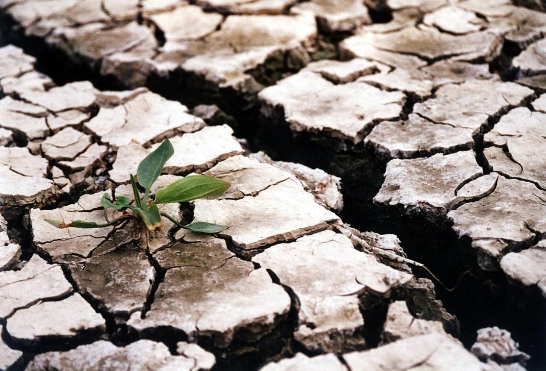 Oxfam: Emisiile de CO2 pot crește preţul alimentelor din întreaga lume cu 80%