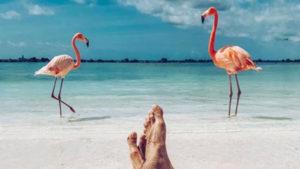 Gardien de flamants roses aux Bahamas, le job de rêve à pourvoir !