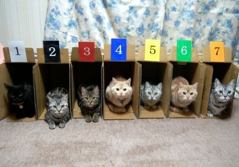 Random Cool Stuff: Too Many Cats?  Here Are a Few Ways To Organize Them!