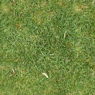 s320_grass