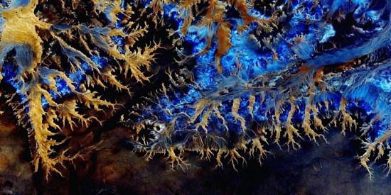 blue-phoenix.jpg