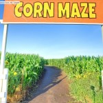 Walk through a Street View-powered corn maze