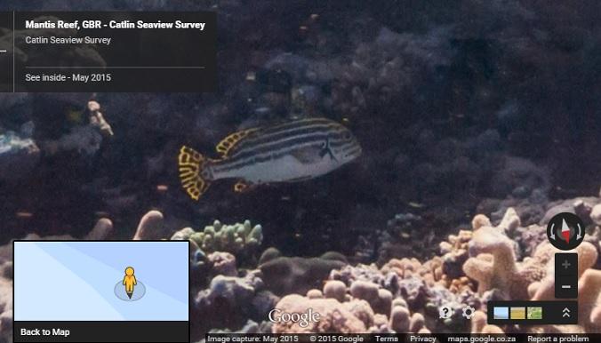 Mantis Reef