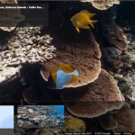 Celebrate World Oceans Day with the Catlin Seaview Survey