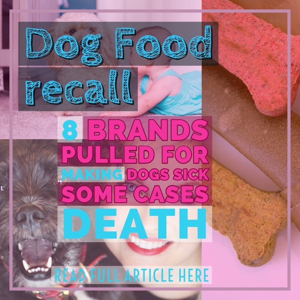 Dog food recall,gear up poet, poet the puppy,dog clothes,