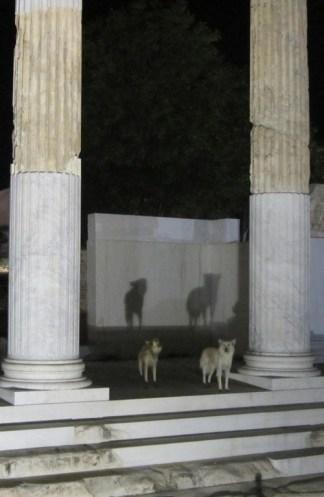 Athinai-dogs