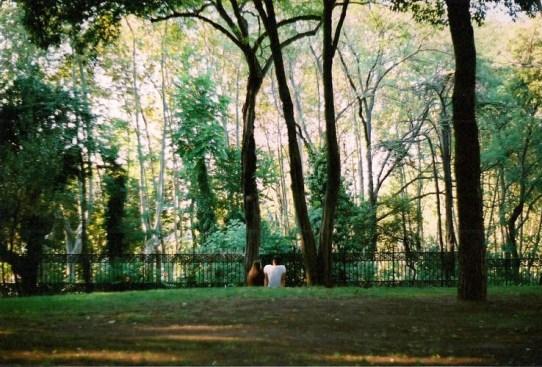 Love-beyond-trees