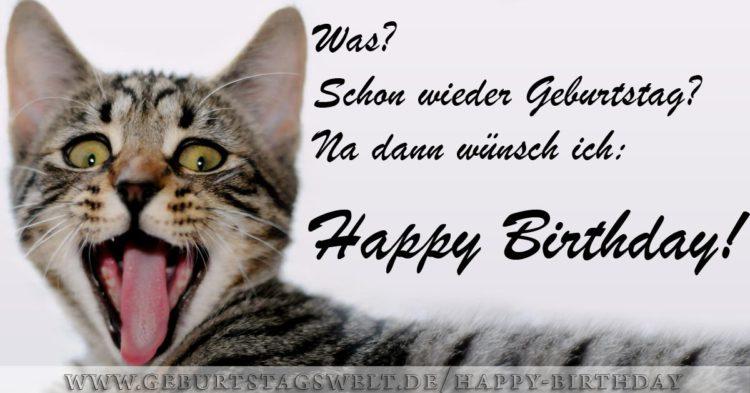 Geburtstag Bilder Mit Katzen Gb Bilder Gb Pics Gastebuchbilder