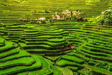 Banaue ifugao rice fields
