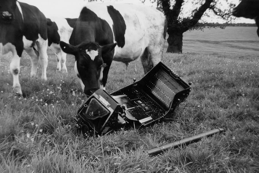 CRASH: Cows find debris from the planes that collided in the skies above Woodborough in 1966