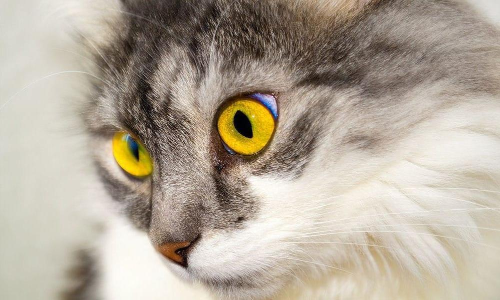 cat-stock