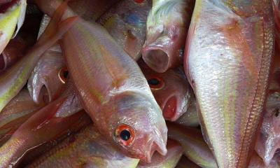 Fish_stock