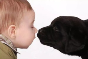 emociones animales y humanas