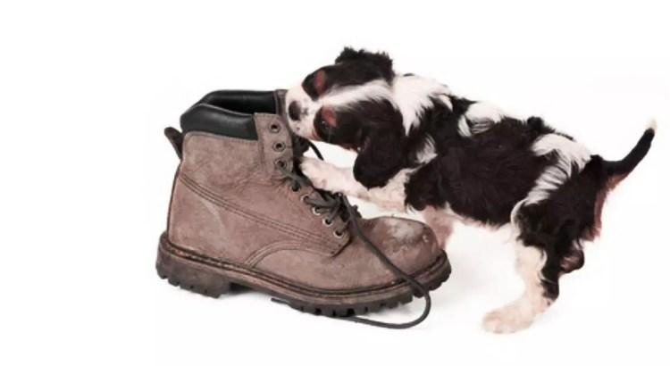 bases educativas el cachorro