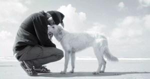 terapia emocional animal