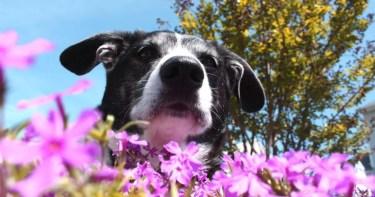 flores de bach para perros y animales