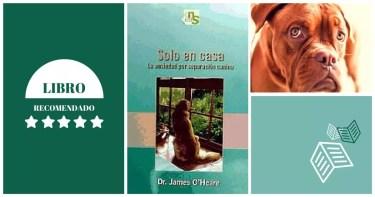 Solo en casa - La ansiedad por separación canina
