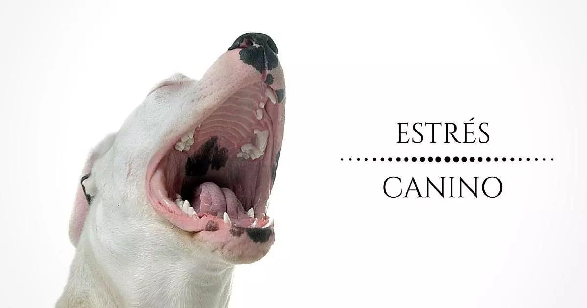 curso estres canino, funcionamiento, causas y sintomas