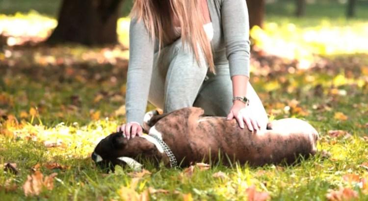 como dar reiki a los perros y otros animales