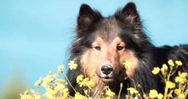 guia de flores de bach para animales
