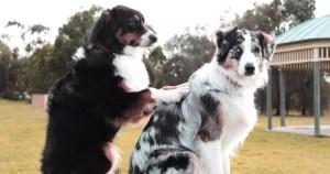 consulta veterinaria holística