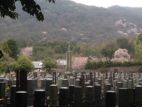 Le cimetière de Sagano