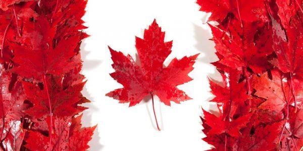 Drapeau du Canada en feuilles d'érable rouge pour la semaine canadienne
