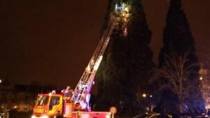 """Un homme s'est retranché toute la nuit dans un séquoia devant la mairie pour """"faire chier le monde"""""""