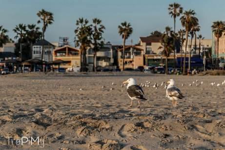 Plaża w Venice