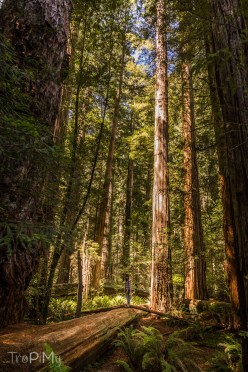 tropimy-star-wars-return-of-the-jedi-redwood-1