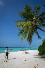 kokosy prosto z palmy