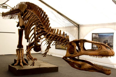 Tyrannotitan chubutensis skeleton
