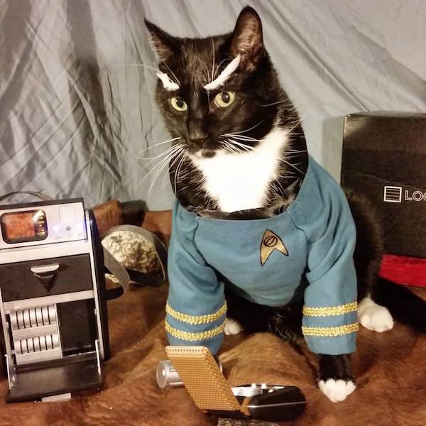 spock-cat