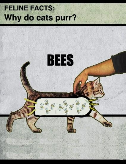 cats-purr